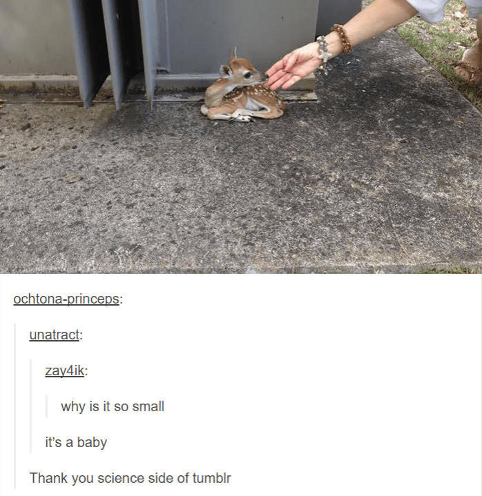 hand reaching out to touch tiny baby deer sitting near building