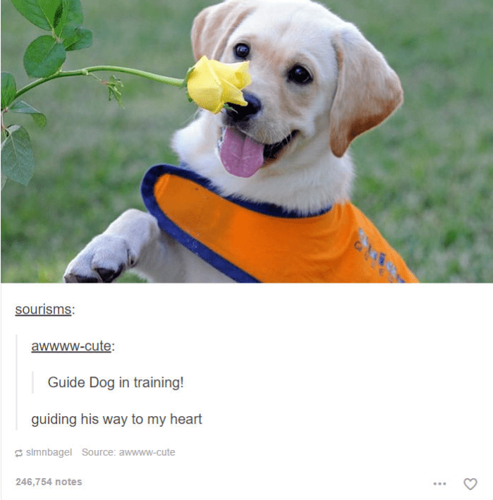 tiny guide dog puppy smelling rose