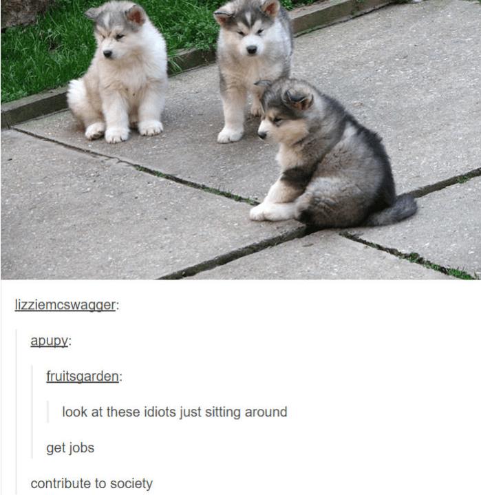 three baby huskies sitting on the ground get jobs