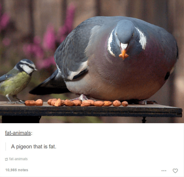 fat pigeon sitting next to tiny bird eating nuts