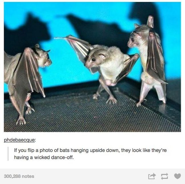 photo of hanging bats turned upside down looks like theyre dancing