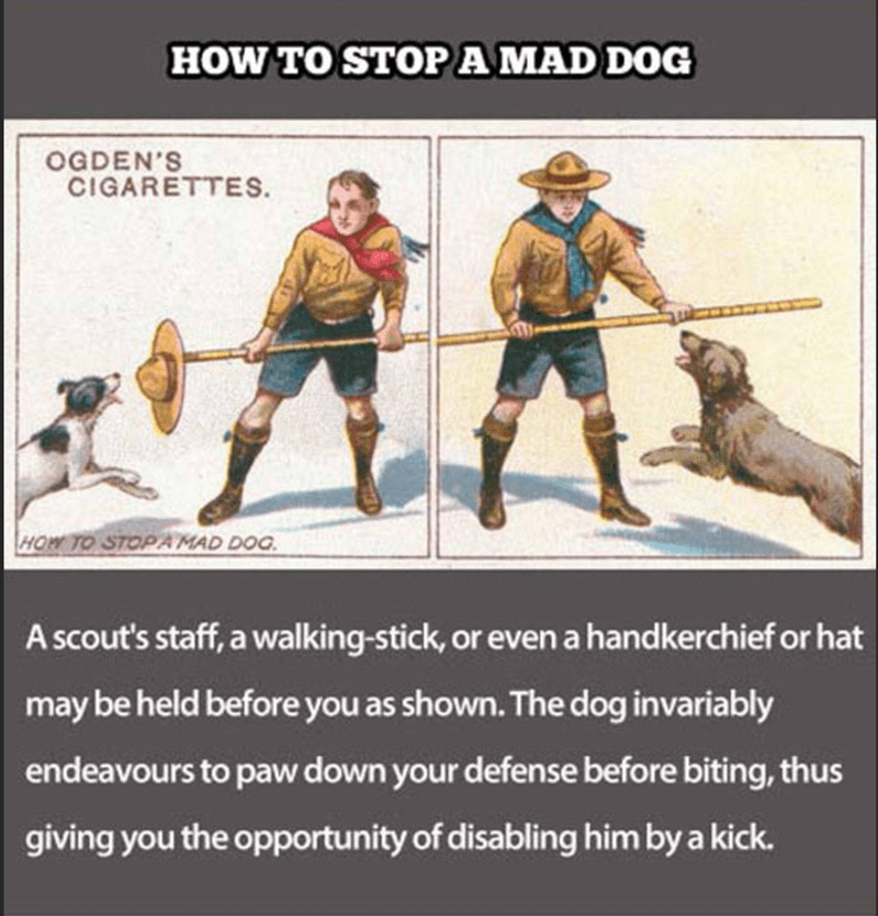 Human - HOW TO STOPA MAD DOG OGDEN'S CIGARETTES. HOW TO STOP AMAD DOG A scout's staff, a walking-stick, or even a handkerchief or hat may be held before you as shown. The dog invariably endeavours to paw down your defense before biting, thus giving you the opportunity of disabling him by a kick.