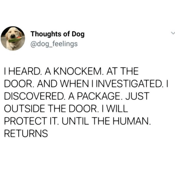 Text - Thoughts of Dog @dog_feelings T HEARD. A KNOCKEM. AT THE DOOR. AND WHEN I INVESTIGATED. I DISCOVERED. A PACKAGE. JUST OUTSIDE THE DOOR. I WILL PROTECT IT. UNTIL THE HUMAN. RETURNS