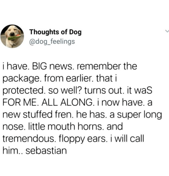 Text - Thoughts of Dog @dog_feelings i have. BIG news. remember the package. from earlier. that i protected. so well? turns out. it waS FOR ME. ALL ALONG. i now have. a new stuffed fren. he has. a super long nose. little mouth horns. and tremendous. floppy ears. i will call him.. sebastian