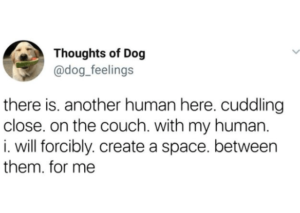 Text - Thoughts of Dog @dog_feelings there is. another human here. cuddling close. on the couch. with my human. i. will forcibly. create a space. between them. for me