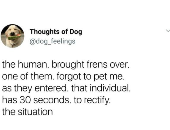 dog tweet