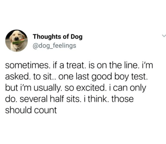 Text - Thoughts of Dog @dog_feelings sometimes. if a treat. is on the line. i'm asked. to sit.. one last good boy test but i'm usually. so excited. i can only do. several half sits. i think. those should count