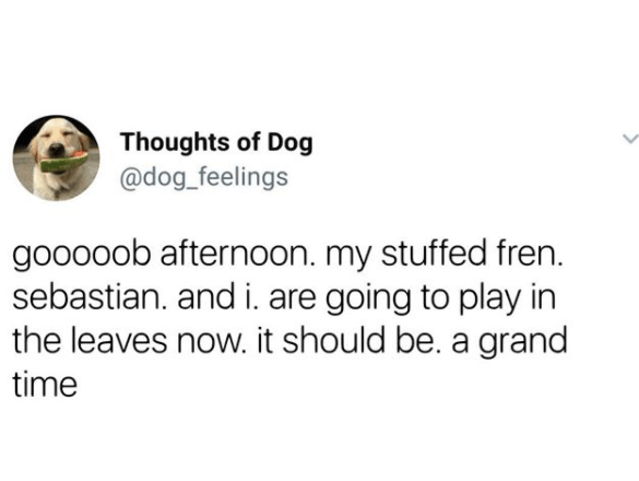 Text - Thoughts of Dog @dog_feelings gooooob afternoon. my stuffed fren. sebastian. and i. are going to play in the leaves now. it should be. a grand time