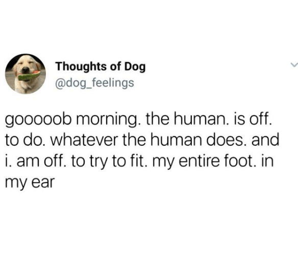 Text - Thoughts of Dog @dog_feelings gooooob morning. the human. is off. to do. whatever the human does. and i. am off. to try to fit. my entire foot. in my ear