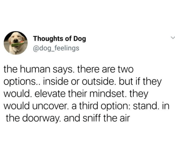 Text - Thoughts of Dog @dog_feelings the human says. there are two options. inside or outside. but if they would. elevate their mindset. they would uncover. a third option: stand. in the doorway. and sniff the air