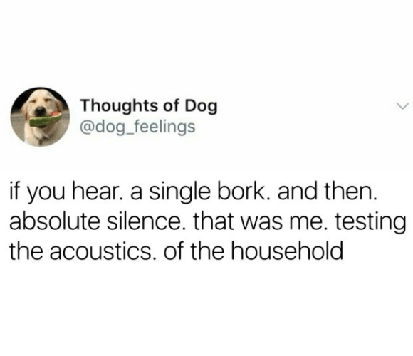 Text - Thoughts of Dog @dog_feelings if you hear. a single bork. and then. absolute silence. that was me. testing the acoustics. of the household