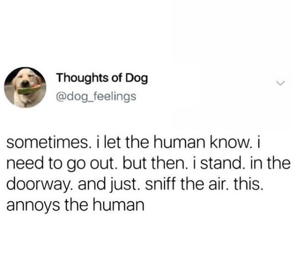 Text - Thoughts of Dog @dog_feelings sometimes. i let the human know. i need to go out. but then. i stand. in the doorway. and just. sniff the air. this. annoys the human