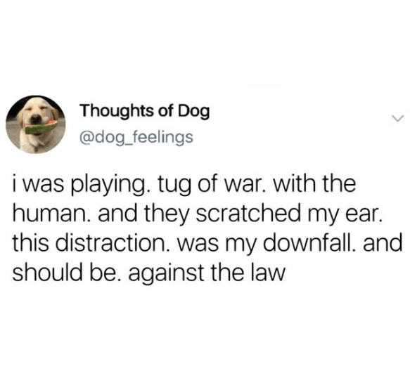 Text - Thoughts of Dog @dog_feelings i was playing. tug of war. with the human. and they scratched my ear. this distraction. was my downfall. and should be. against the law