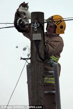 Lineman - Roger Griffiths /SWNS.com