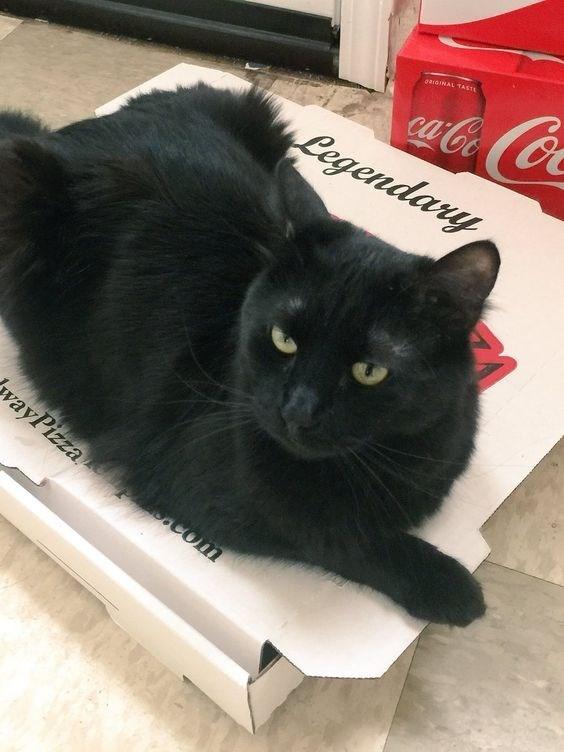 Cat - garGINAL TASTE Legendany wayPizza com