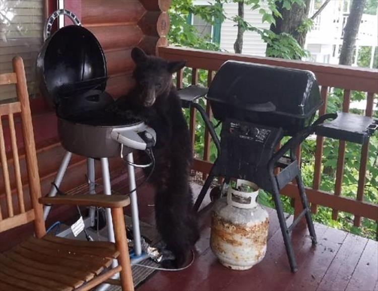 Cheezburger Image 9151972352
