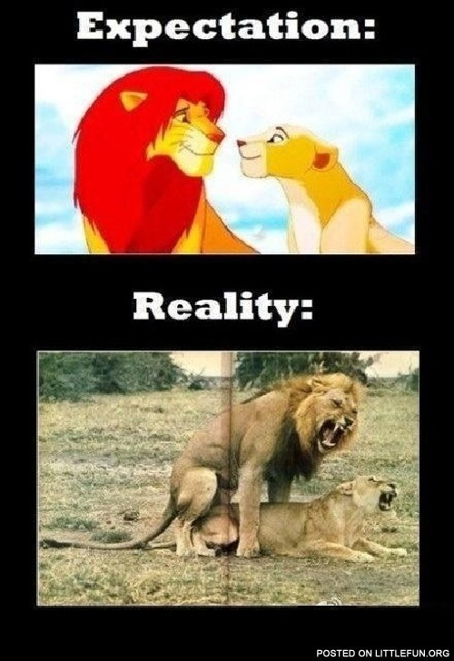 Lion - Expectation: Reality: POSTED ON LITTLEFUN.ORG