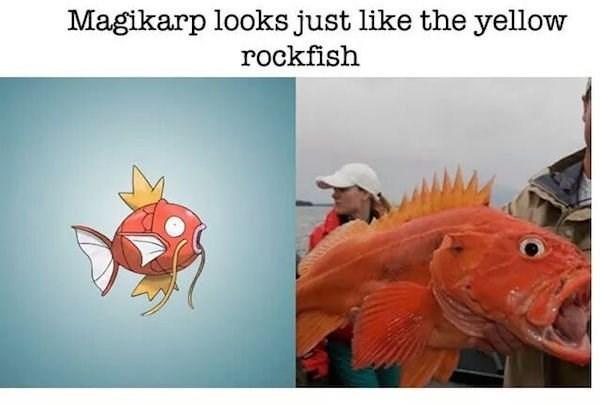 Fish - Magikarp looks just like the yellow rockfish