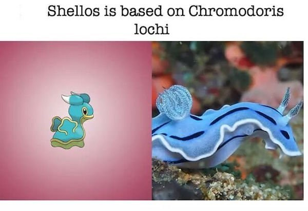 Organism - Shellos is based on Chromodoris lochi