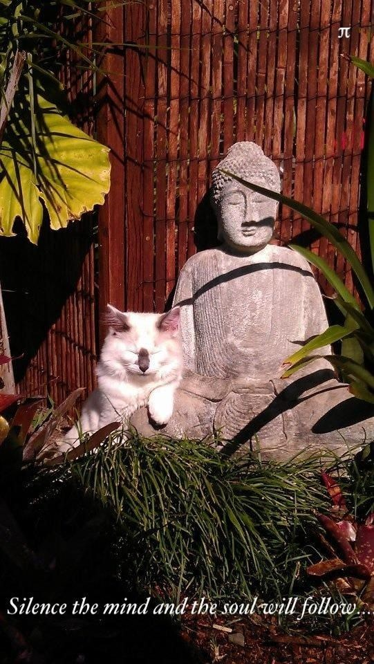 Cat - Silence the mind and the soul will follow