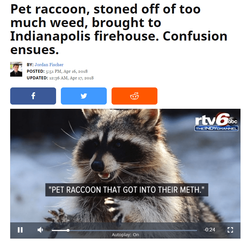 """Adaptation - Pet raccoon, stoned off of too much weed, brought to Indianapolis firehouse. Confusion ensues. BY: Jordan Fischer POSTED: 5:51 PM, Apr 16, 2018 UPDATED: 12:36 AM, Apr 17, 2018 f rtv6. abc THEINDYCHANNEL """"PET RACCOON THAT GOT INTO THEIR METH."""" 11 ЕЕ -0:24 Autoplay: On"""