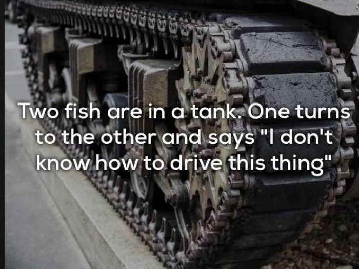 "bad joke - Motor vehicle - Two fish are in a tank One turns to the other and says ""I don't know how to drive this thing"""