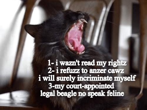 Yawn - 1-i wazn't read my rightz 2-i refuzz to anzer cawz i will surely incriminate myself 3-my court-appointed legal beagle no speak feline
