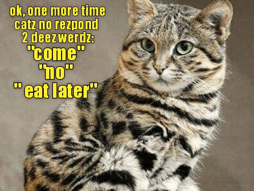 "Cat - ok, one more time catz no rezpond 2 deezwerdz: ""come"" ""ho"" ""eat later"