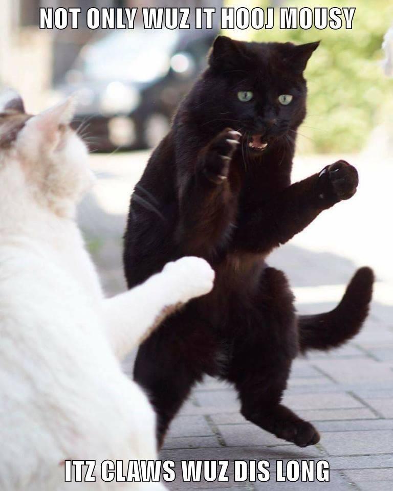 Cat - NOT ONLY WUZIT HOOJ MOUSY ITZ CLAWS WUZ DIS LONG