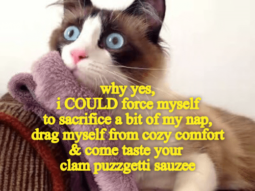 Cat - why yes, i COULD force myself to sacrifice a bit of my nap, drag myself from cozy comfort &come taste your clam puzzgetti sauzee