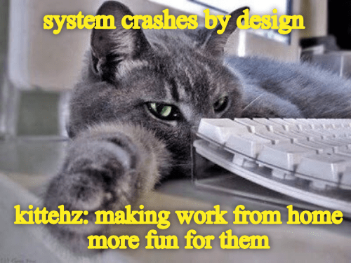 Cat - system crashes by design kittehz: making work from home more fun for them
