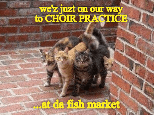 Cat - we'z juzt on our way to CHOIR PRACTICE .at da fish market