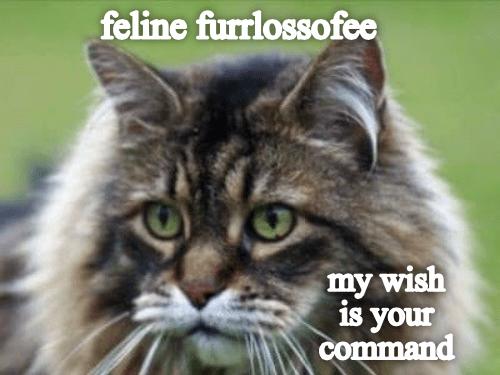 Cat - feline furrlossofee my wish is your command