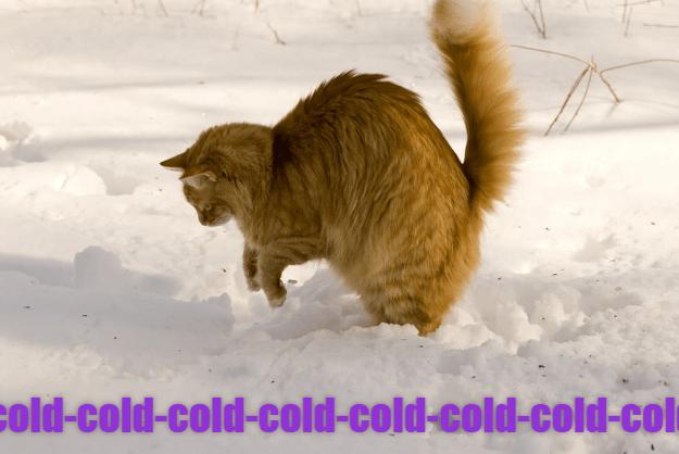 Cat - cold-cold-cold-cold-cold-cold-cold-col