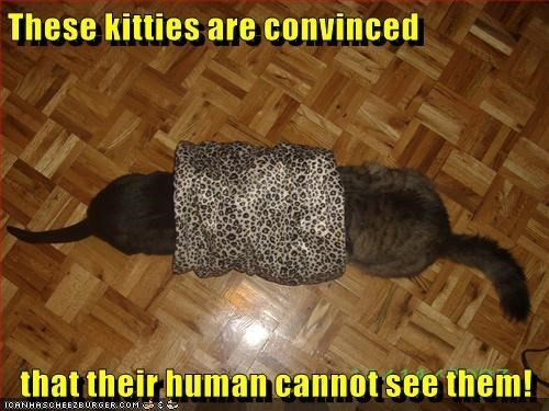 Tail - These kitties are convinced that their human cannot see them! ICANHASCHEEZBURGER coM
