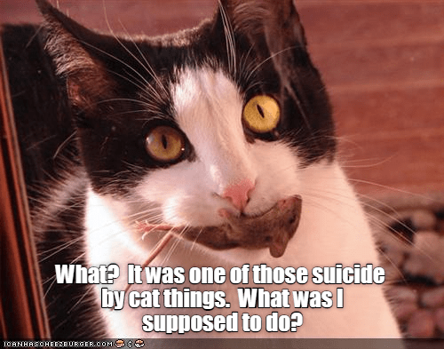 Cat - What? twas one of those suicide bycat things. What was supposed to do? ICANHASCHEE2EURGER cOM