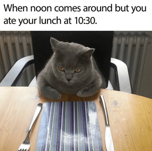 caturday meme about eating your lunch early