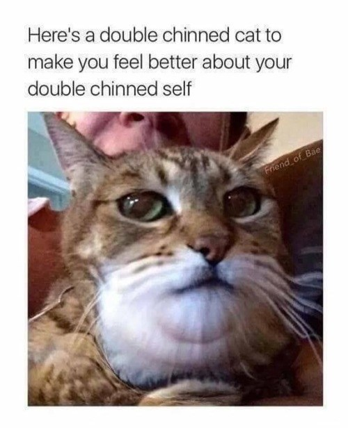 caturday meme with pic of a cat with a double chin