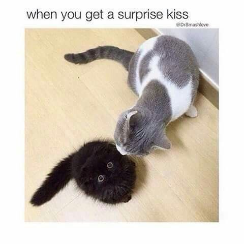 caturday meme about surprise kisses with a shocked black cat getting a nip