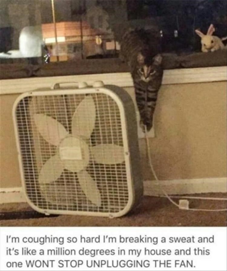 caturday meme about a cat unplagging a fan on a hot day