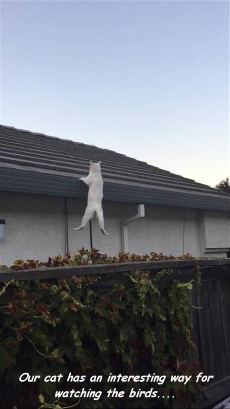 caturday meme about a cat watching birds by hanging from the roof