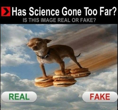 Cheezburger Image 9152577024
