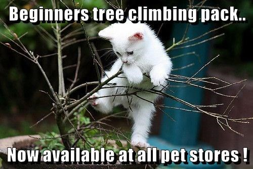 Beginners tree climbing pack.. now available at all pet stores | cute pic of a small kitten climbing on a little branch