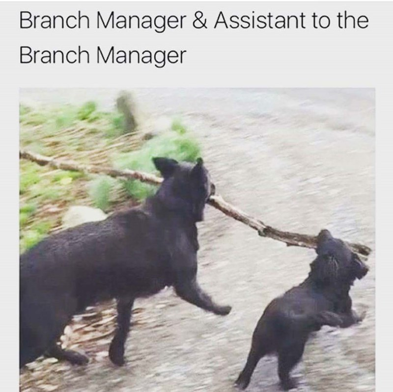 Canidae - Branch Manager & Assistant to the Branch Manager
