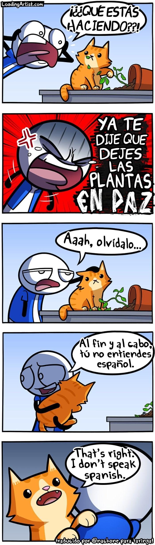 cuando el gato no te entiende porque no habla tu mismo idioma