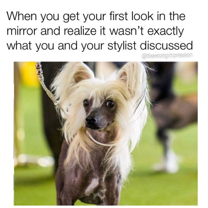 Dog breed - When you get your first look in the mirror and realize it wasn't exactly what you and your stylist discussed @thewrongimoression