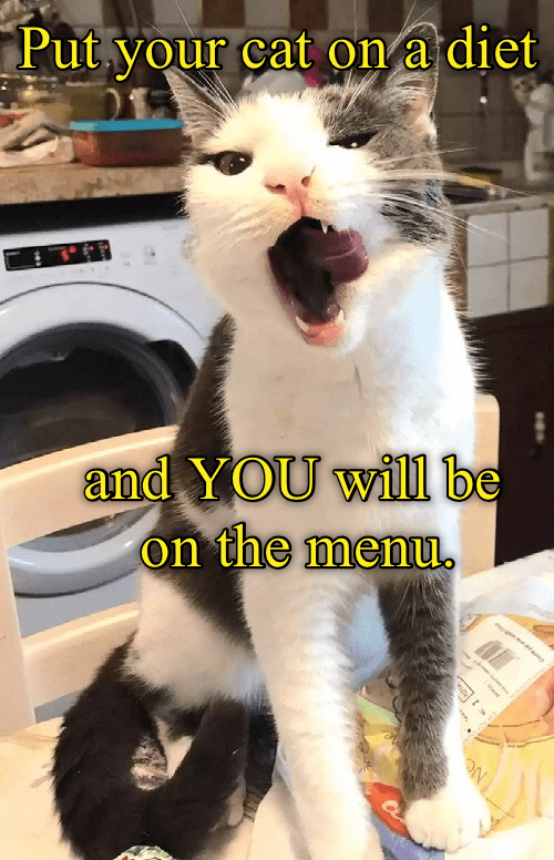 You shouldn't put your cat on a diet.