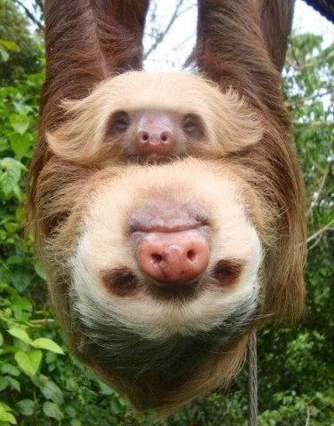 sloth mom