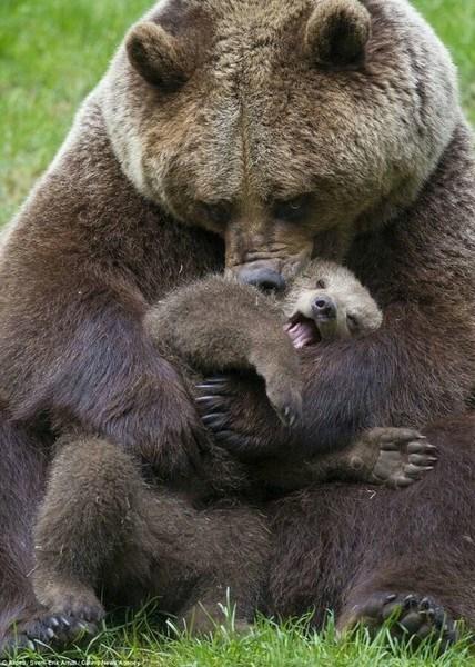 bear mom with cub