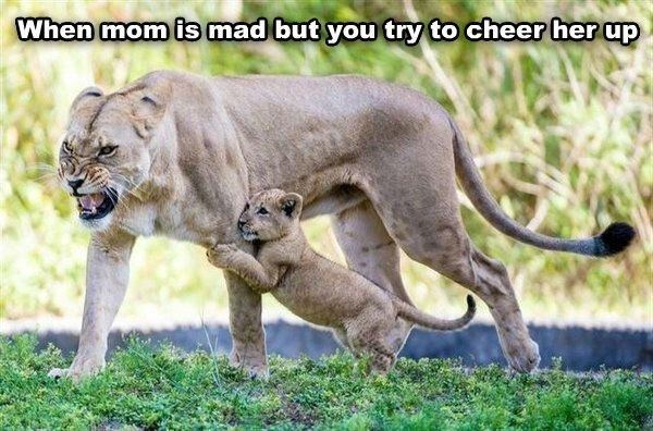 Terrestrial animal - When mom is mad but you try to cheer her up